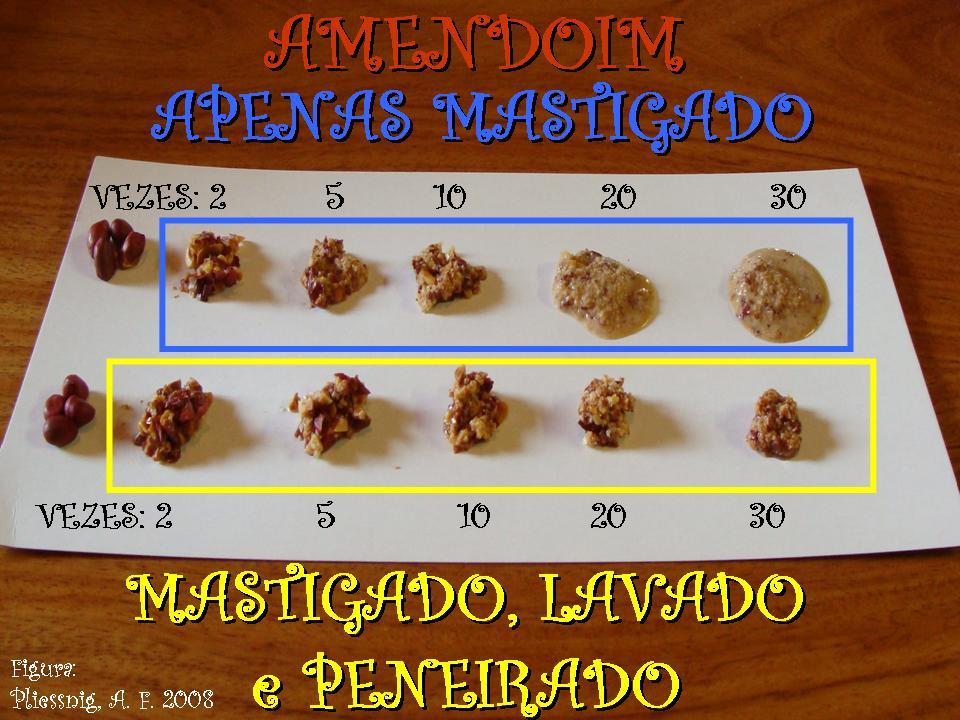 http://portaldoprofessor.mec.gov.br/storage/discovirtual/aulas/1134/imagens/AMENDOIM_digestao.jpg