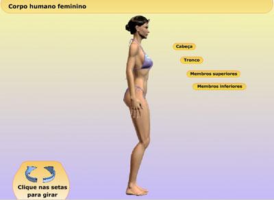 http://portaldoprofessor.mec.gov.br/storage/discovirtual/aulas/1479/imagens/mulher3D.jpg