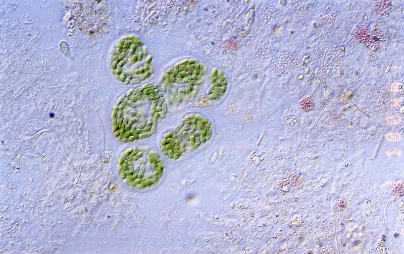 http://portaldoprofessor.mec.gov.br/storage/discovirtual/aulas/1523/imagens/Cyanobacteria_guerrero_negro.jpg