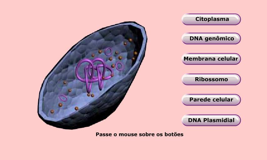 http://portaldoprofessor.mec.gov.br/storage/discovirtual/aulas/1523/imagens/estrutura-bacteria.jpg