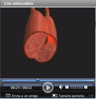 http://portaldoprofessor.mec.gov.br/storage/discovirtual/aulas/1716/imagens/musculos.jpg