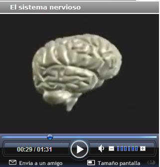 http://portaldoprofessor.mec.gov.br/storage/discovirtual/aulas/1716/imagens/nervoso.jpg