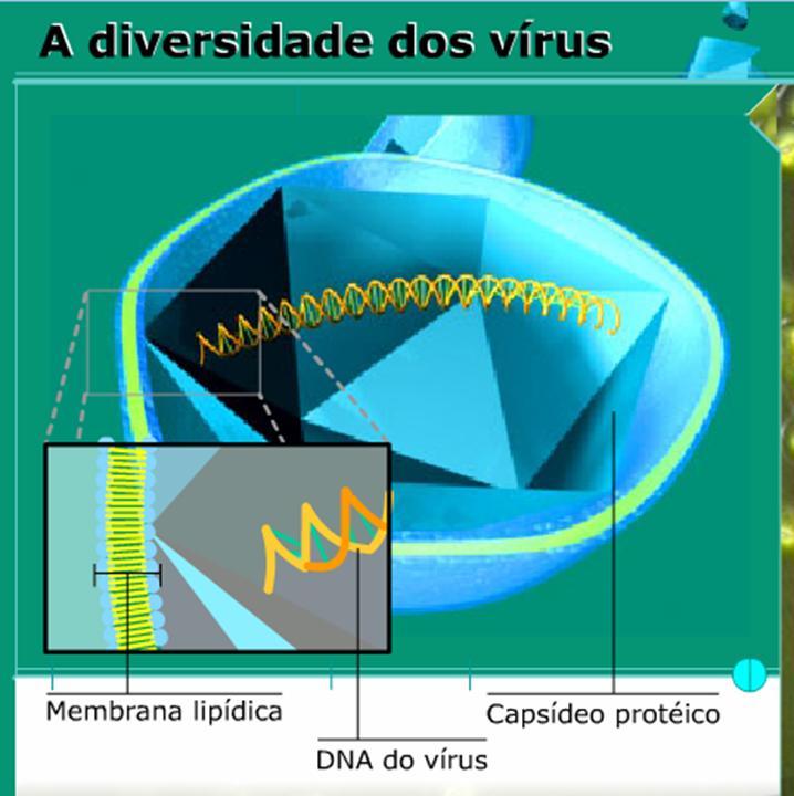 http://portaldoprofessor.mec.gov.br/storage/discovirtual/aulas/1844/imagens/diversidade_virus.jpg