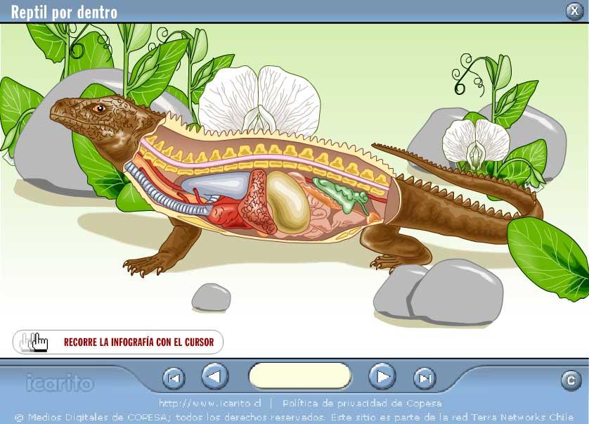 http://portaldoprofessor.mec.gov.br/storage/discovirtual/aulas/1879/imagens/anato_reptil.jpg