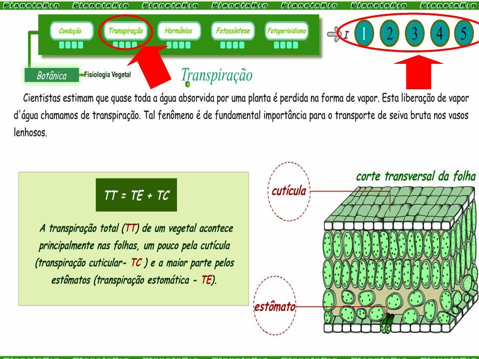 http://portaldoprofessor.mec.gov.br/storage/discovirtual/aulas/1955/imagens/fisiologia_vegetal.jpg