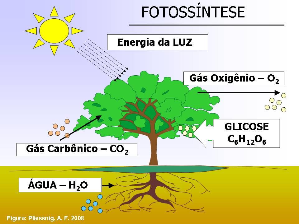 http://portaldoprofessor.mec.gov.br/storage/discovirtual/aulas/554/imagens/FOTOSSINTESE.jpg