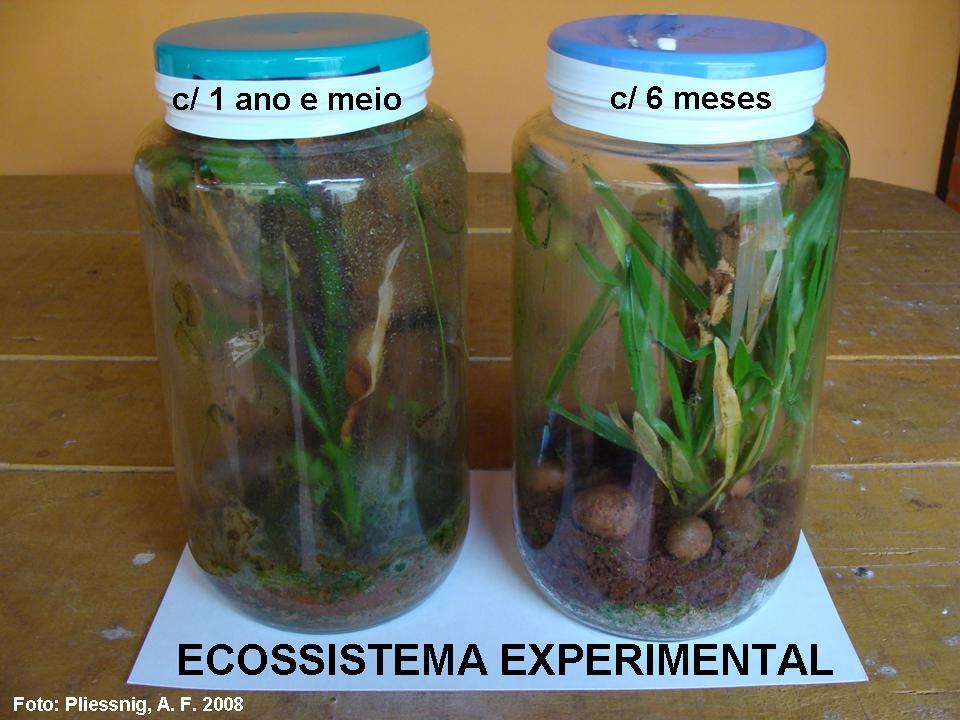http://portaldoprofessor.mec.gov.br/storage/discovirtual/aulas/554/imagens/ecossistema_experimental_01.jpg