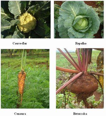 Aprendendo vegetais