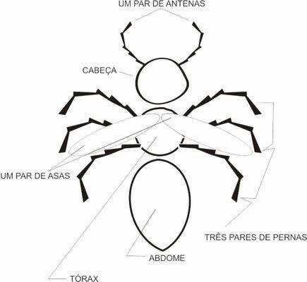 portal del profesor caracter237sticas alimenta231227o e