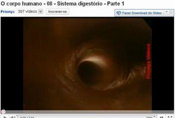 sistema digestorio 5