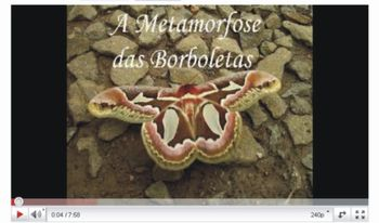 Video borboleta