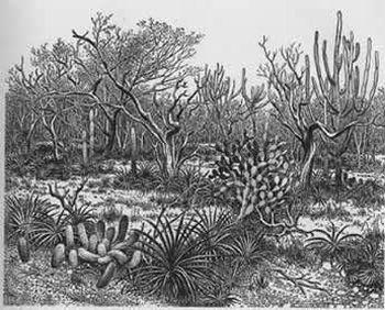 Caatinga 15