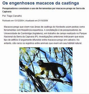Caatinga 16