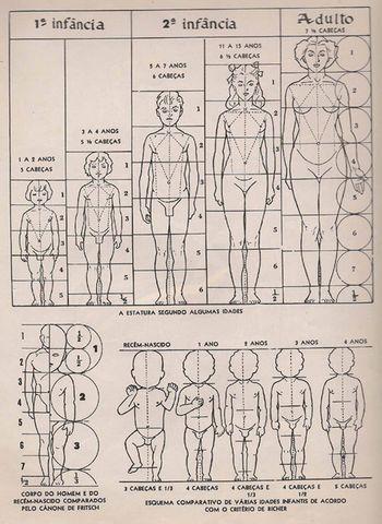 Quadro anatomia humana