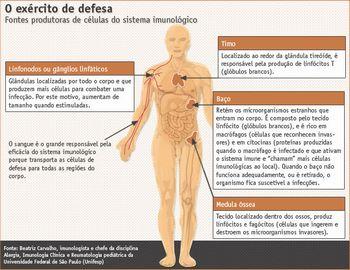 O sistema imunológico humano